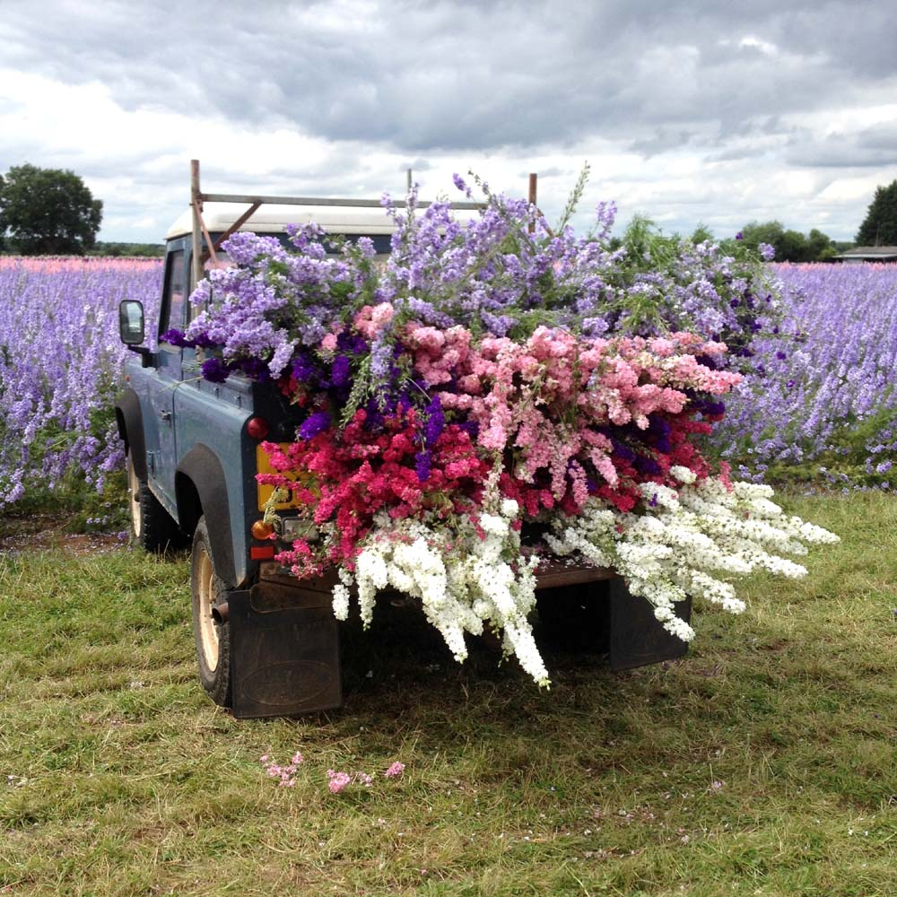 Flower Landy, 2017, The Confetti Flower Field, The Real Flower Petal Confetti Company, Worcestershire