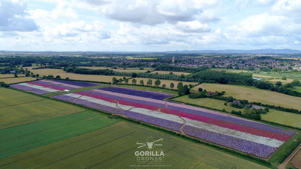 Gorilla Drones Confetti Flower Field from the air - 2019. Wyke Manor Estate, Worcestershire.