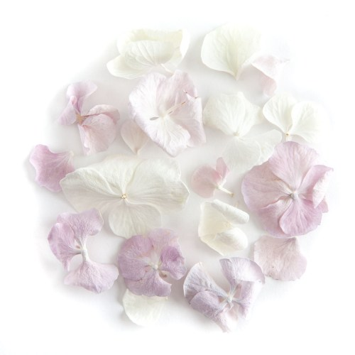 Lilac and White Hydrangea Petals