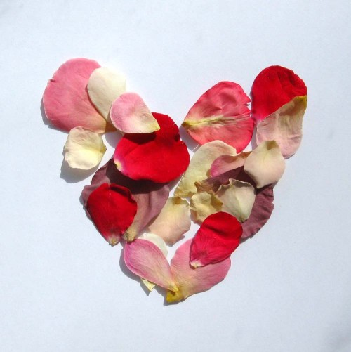 Rose petals in a lovely heart shape