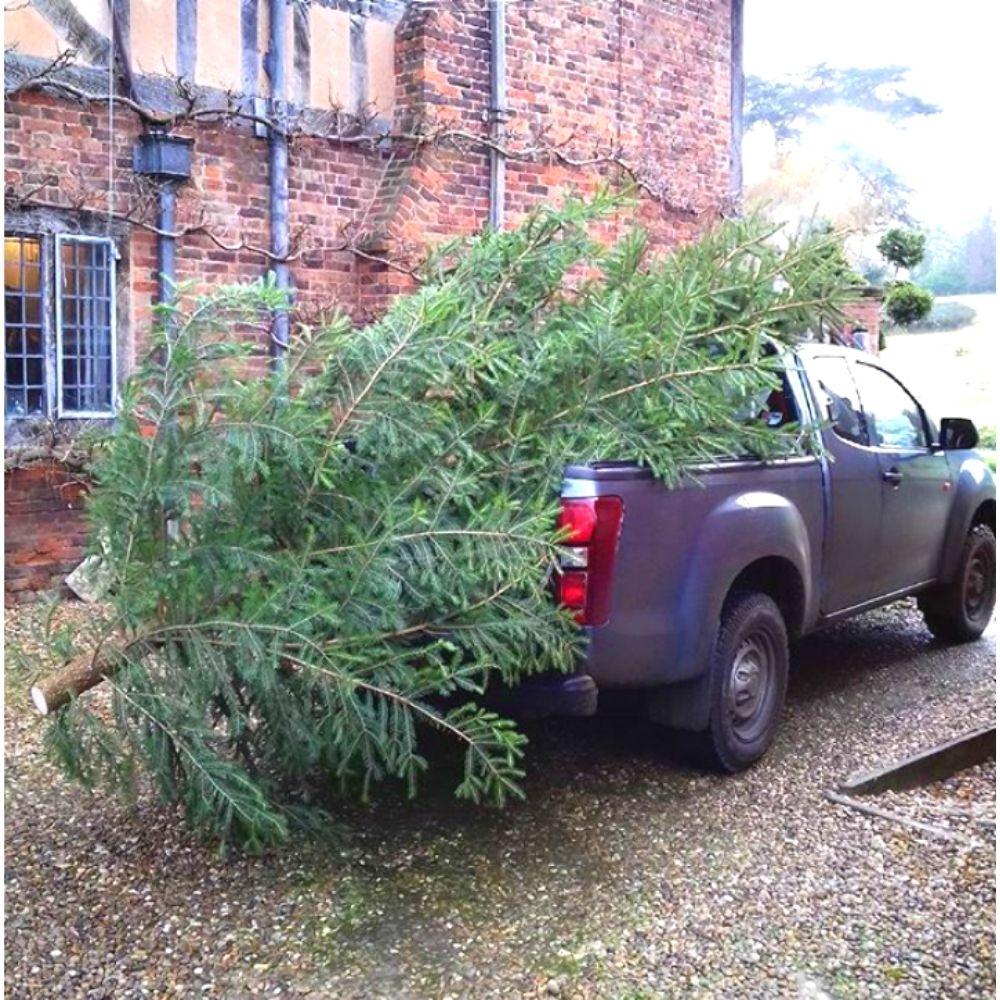 The Wyke Manor Christmas Tree