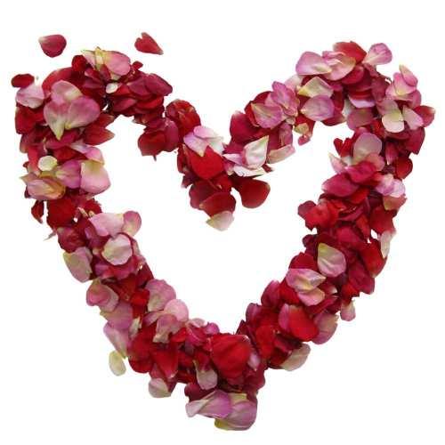 Rose Petals for Funerals