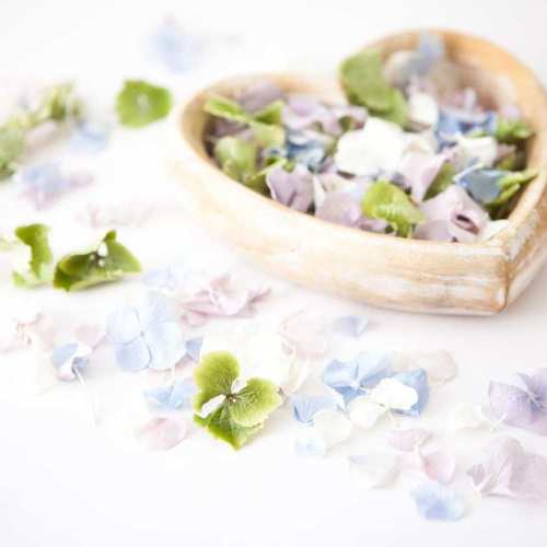 hydrangea memorial petals