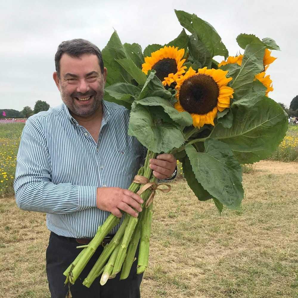 a bunch of sunflowers - sunflower field wyke manor estate