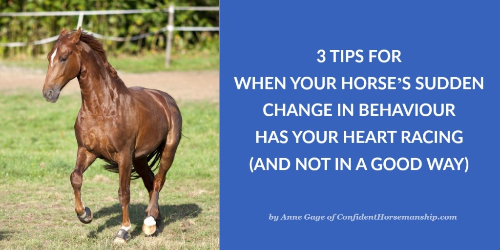 3 Tips For When Your Horse's Sudden Change in Behaviour Has