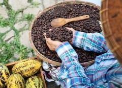 Ejidatarios de Tapachula, al rescate del cacao chiapaneco
