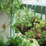 Come realizzare un orto sul balcone