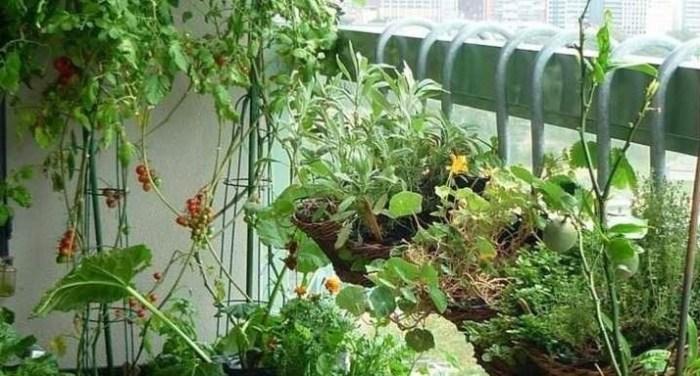 giardino su balcone
