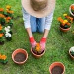Come fare giardinaggio