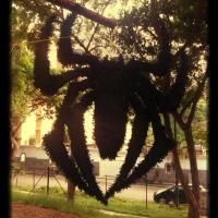 30 Day Snap #22 La Araña!!