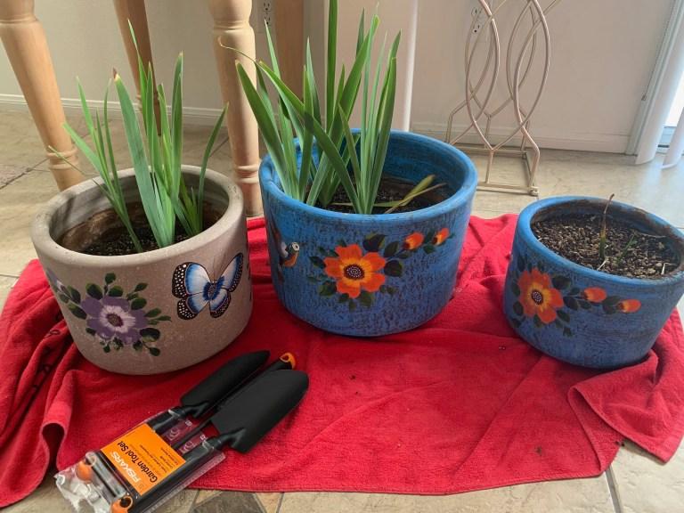 Iris-pots