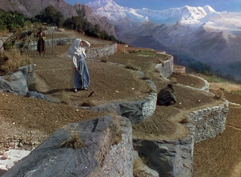 960_gardening_black_narcissus_blu-ray
