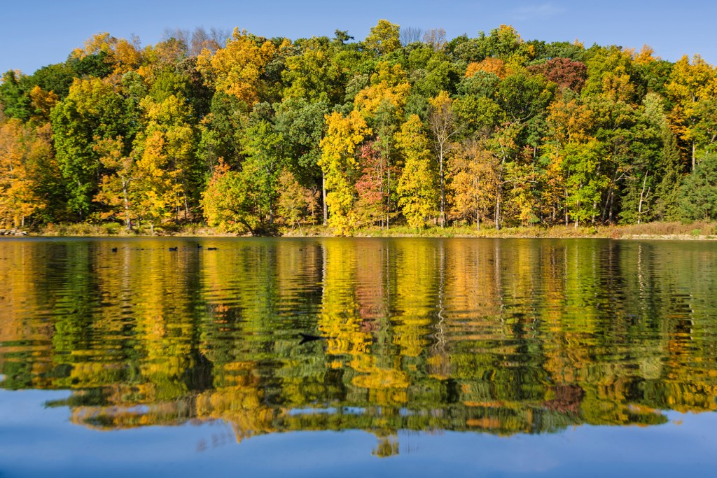 Trees at Beebe lake in Cornell university