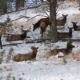 SD GFP encourages registration for winter depredation hunts