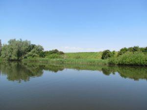 k-Ufer Seitenarm Biesbosch