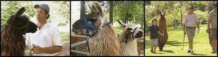 llama_header