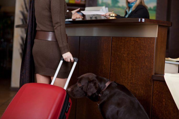 Consejos para viajar con un perro