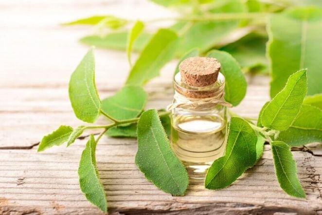 Tea tree oils, oil powders & extract bulk supply & manufacture ...