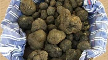 umbria-truffles_4