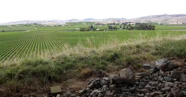 Brancott-Estate-Winery_field