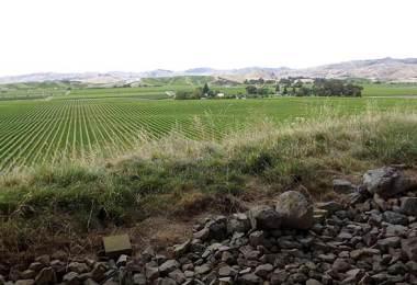 Brancott-Estate-Winery_field