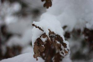 IMG_6822_verschneite_Bäume_kleiner