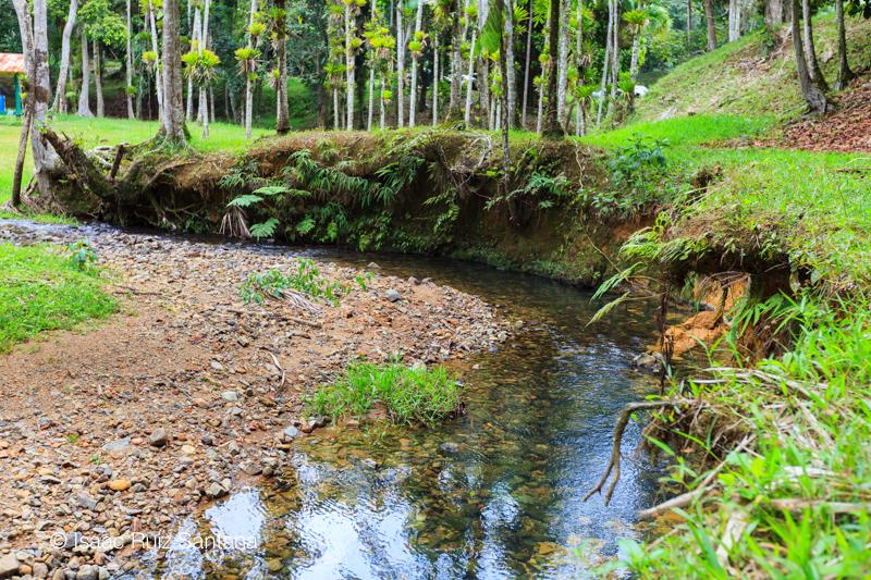 Bosque Carite Conoce A Puerto Rico