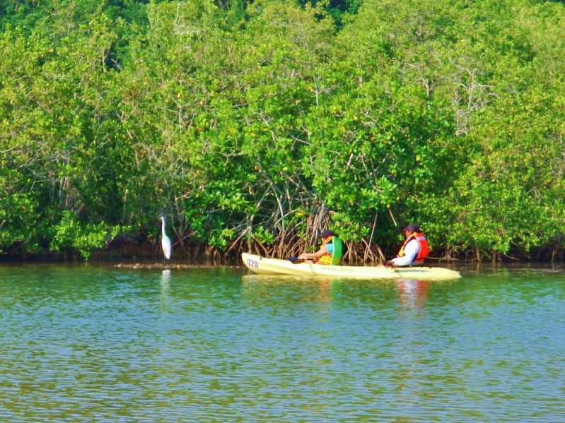 Kayak en Manzanillo