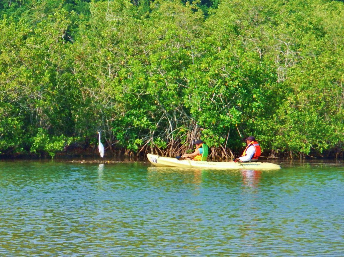 Tour en Kayak por el estero de Manzanillo (11)