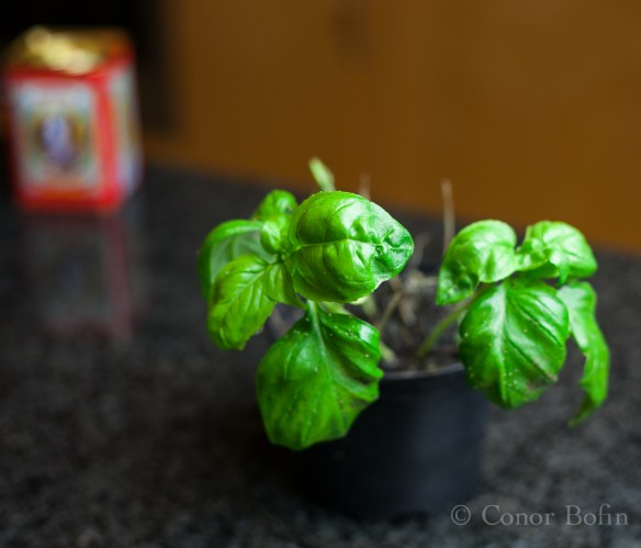 I have to put a new basil plant on the shopping list.