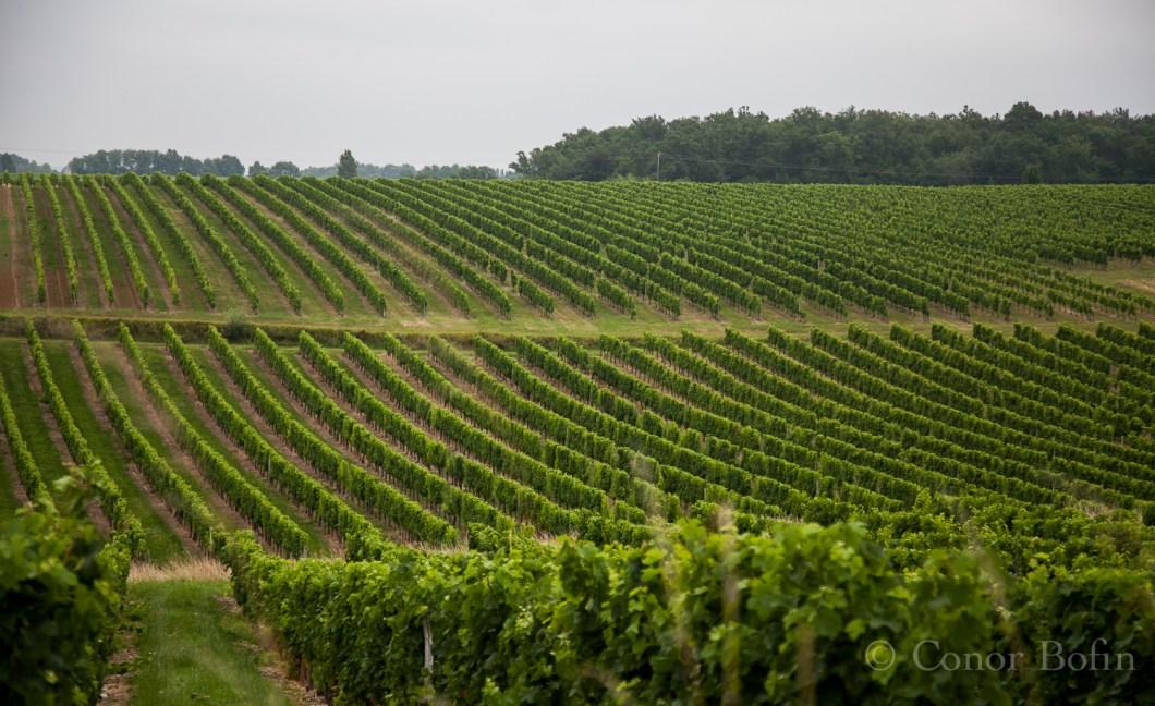 Wine edition