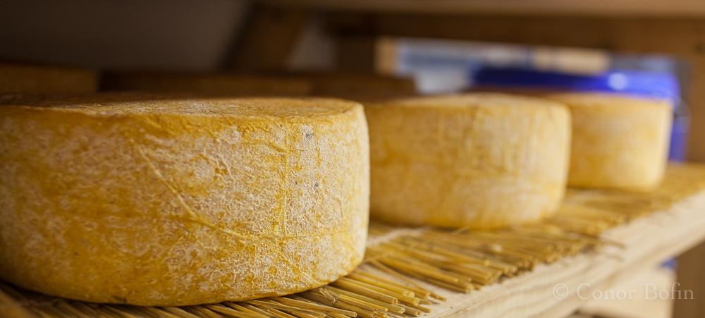 Glorious cheeses maturing at Sheridan's.