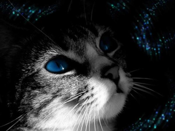 Risultati immagini per gatti magici