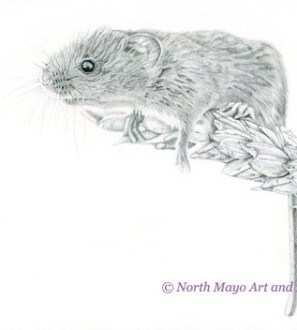 Limited Edition prints of the original graphite drawing 'George the Mouse'