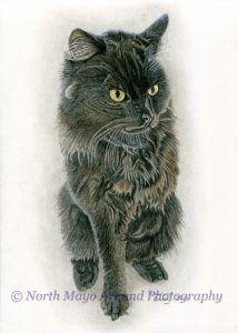 Custom drawn cat portraits and animal portraits