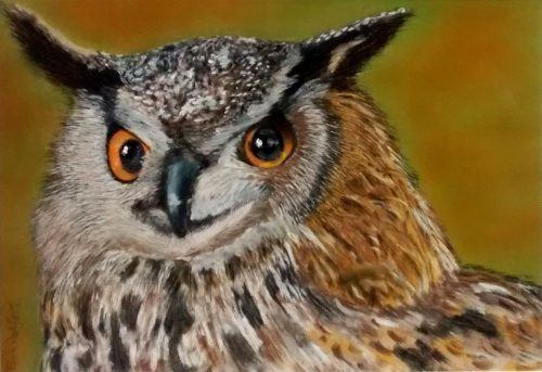 Honed Eared Owl pastels drawing portrait picture
