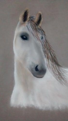 Custom Pastel Pet Horse Portrait Commissions