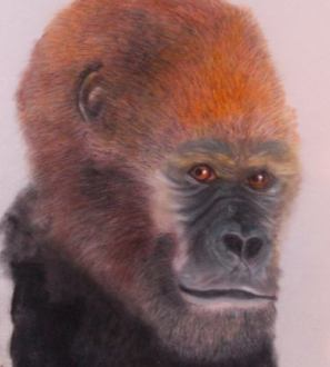 gorilla drawing painting