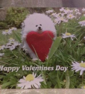 Valentines Day Heart Hog Hedgehog Card