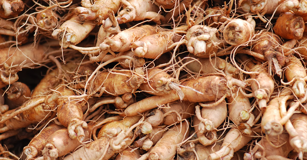 Image Result For What Is Ginseng Good For In The Human Body