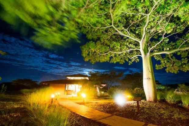 Night-in-the-Jungle
