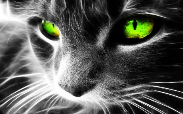 CAT – Protect You And Your Home From Ghosts And Negative Spirits!1