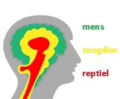 Drie delen van ons brein als gevolg van de evolutie