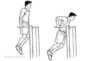 Les dips pour muscler ses pectoraux