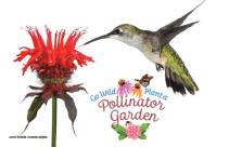 Pollinator Postcard Photo