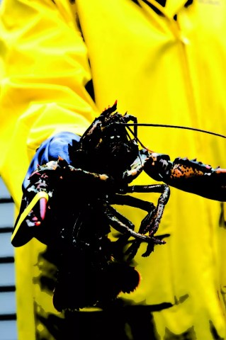 Bottom-feeding catches such as lobster or scallop could be significantly impacted by a bitumen spill in the Bay of Fundy