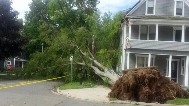 Historic Trees Lost to Arthur
