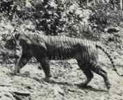 5 recently extinct animal species
