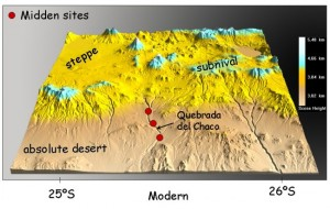 """Vegetation Zones in and near the Atacama Plateau. The desert whales were found in the """"absolute desert"""" region."""