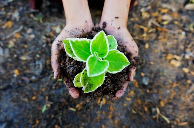 mudas de-solo-verde-planta-ecologia